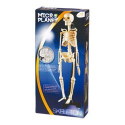 Coffret Science Squelette corps Humain