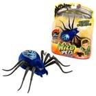 Araignée Interactive Bleue