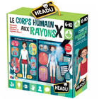 Le corps humain aux rayons X
