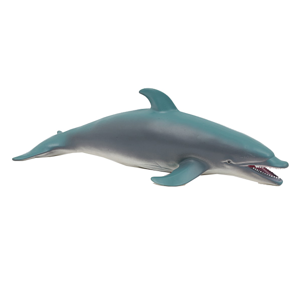 Animal marin